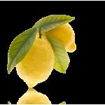 San Pellegrino Limonata 33cl